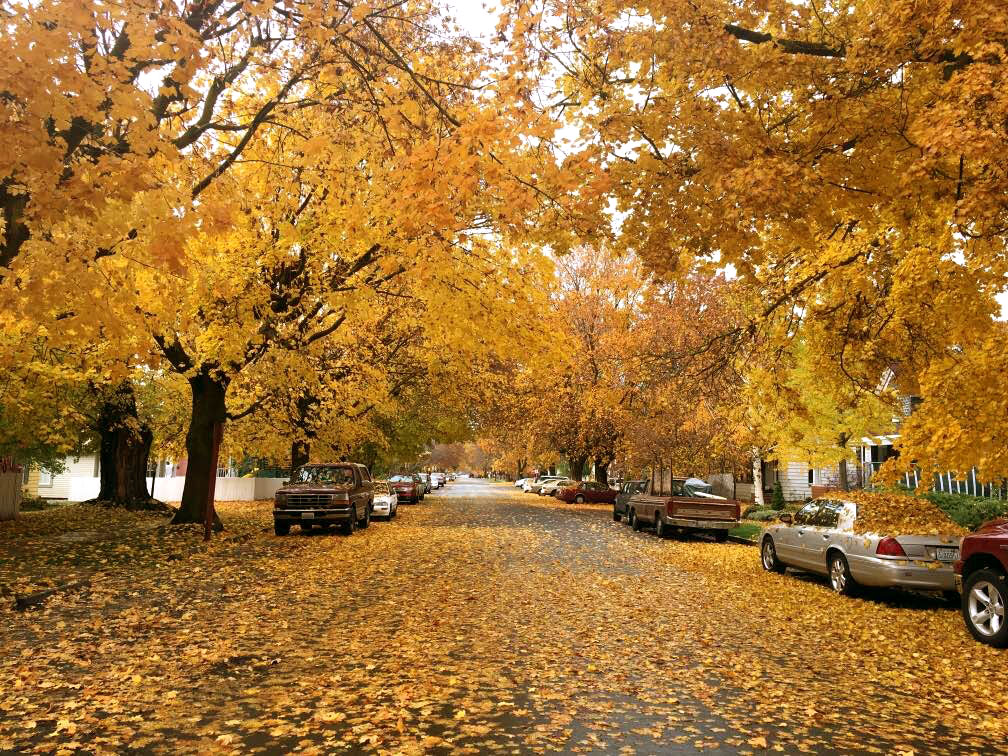 Fall trees in Ellensburg Washington